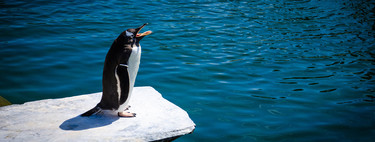 Por qué recomendar que te pases a Linux en 2018 es diferente que en todas las ocasiones anteriores