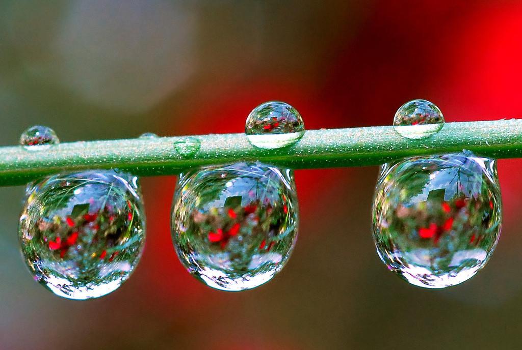 Foto de La belleza de una gota de agua (20/25)