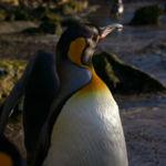 La cuota de mercado de Linux sube por décimo mes consecutivo, pero no te emociones todavía