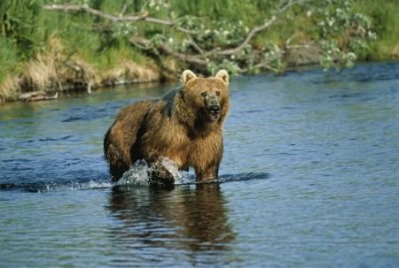Cuando vendes la piel del oso en Moto3 y no lo cazas en Moto2
