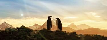 Tim Cook destaca la belleza de la Tierra con fotografías de la campaña 'Shot on iPhone'