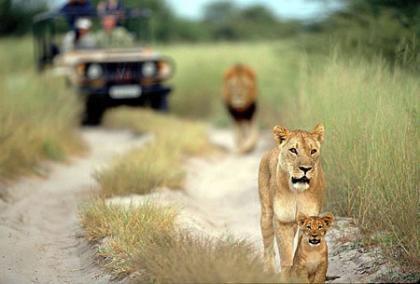 Los 10 mejores destinos para ver vida salvaje en Africa (III)
