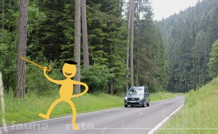 fauna en ruta: por el medio de la carretera