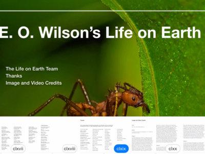 iOS 8.4 beta 3 estrena soporte para libros de iBooks Author por primera vez