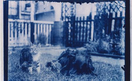 Un fotógrafo descubre una cápsula del tiempo con placas fotográficas y decide revelarlas con el proceso de la cianotipia