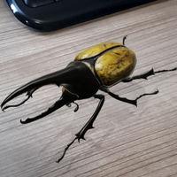 Google añade 23 insectos a sus animales 3D con realidad aumentada: mariposas, mantis, escarabajos...