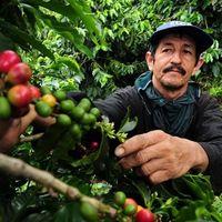 El café podría verse amenazado por el calentamiento global