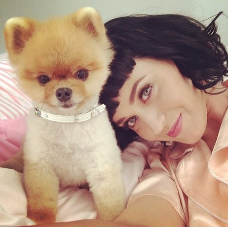 Katy Perry perro