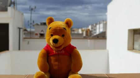 Enfoque selectivo oso