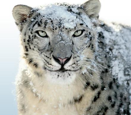 Cómo actualizar a Snow Leopard, análisis de todas las opciones