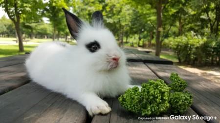 Foto Mascota Conejo