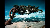 Ansel Adams In Color: la fotografía a color de uno de los genios del paisaje