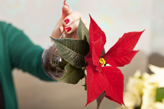3 Von 4 Christbaumkugel Mit Dem Weihnachtsstern Schritt 3 Es