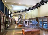 Museos gratis en Bolonia