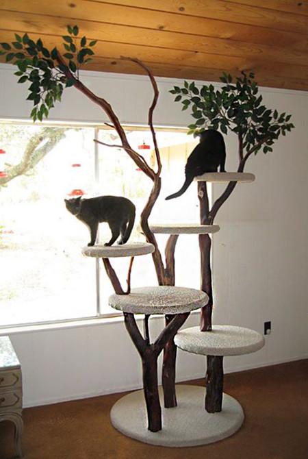 Gatos Rincon 8