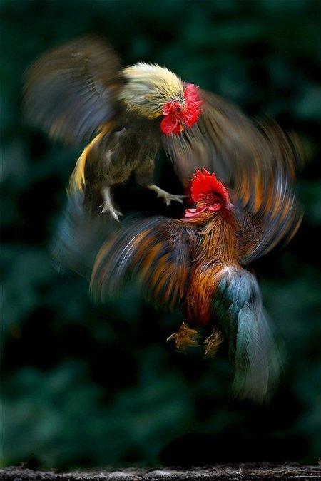 nature-photography-by-sam-lim.jpg