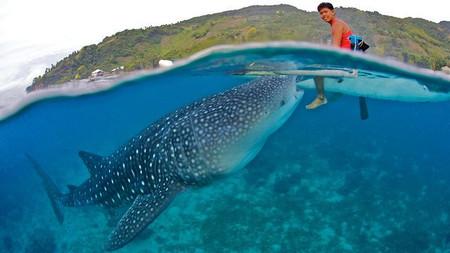 Tiburón ballena y barco. Oslob, Filipinas.
