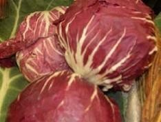 Achicoria, la verdura desconocida