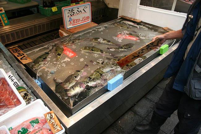 Venta de pez globo en Japón
