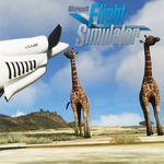 Microsoft Flight Simulator nos muestra la belleza de la fauna animal en un nuevo vídeo