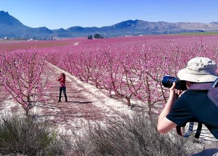 Fotografiando la floración de Cieza