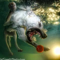 Foto 2 de 7 de la galería sorprendentes-fotografias-caninas-bajo-el-agua en Xataka Foto