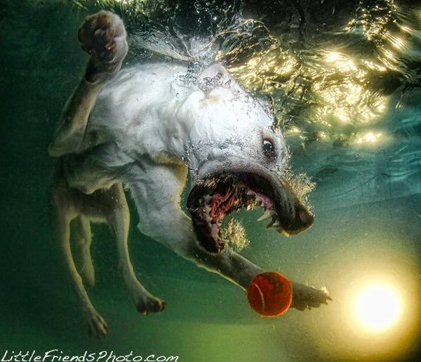 Foto de Sorprendentes fotografías caninas bajo el agua (2/7)