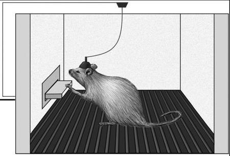 El botón del placer en ratas… y seres humanos que se autoestimulan como adolescentes dándole al botón de una consola de videojuegos (I)