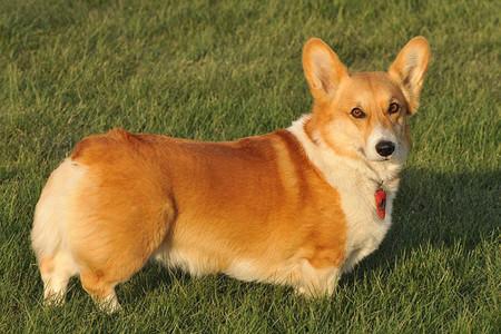 Los perros de la reina Isabel II comen solomillo de ternera - 2