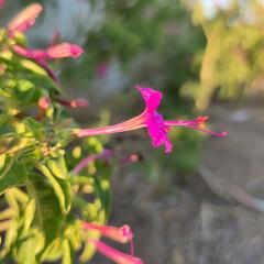 Foto 36 de 40 de la galería xiaomi-mi-10t-pro-galeria-de-fotos en Xataka