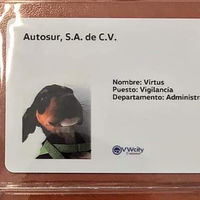 Una agencia de Volkswagen en México adoptó dos perritos y les dio trabajo