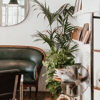 Kitsch, minimalista o retro... fichamos los maceteros perfectos para nuestras plantas de interior
