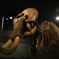 ¿Por qué los humanos extinguieron a los mamuts y no a los conejos?