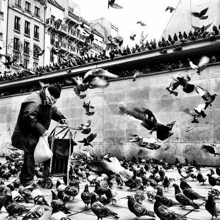 Birds, por ★ Katssenian ★