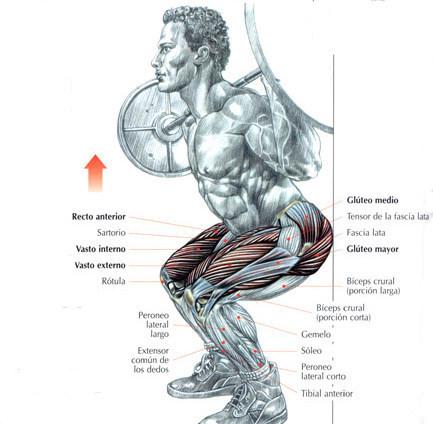 Sentadillas: ¿el mejor ejercicio?