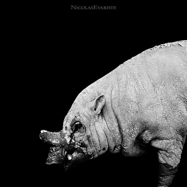 Foto de Nicolas Evariste (2/11)
