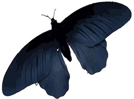 Los desarrolladores de células solares buscan inspiración en mariposas negras