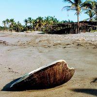 Carne de tortuga, una triste realidad en México