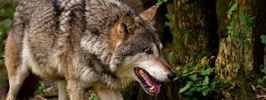 Fue en Alemania, hace entre 16.000 y 14.000 años, cuando nació el perro europeo, según nuevo estudio