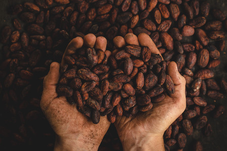 Qué es el movimiento 'bean to bar': volver a los orígenes del cacao para reivindicar el auténtico chocolate de calidad