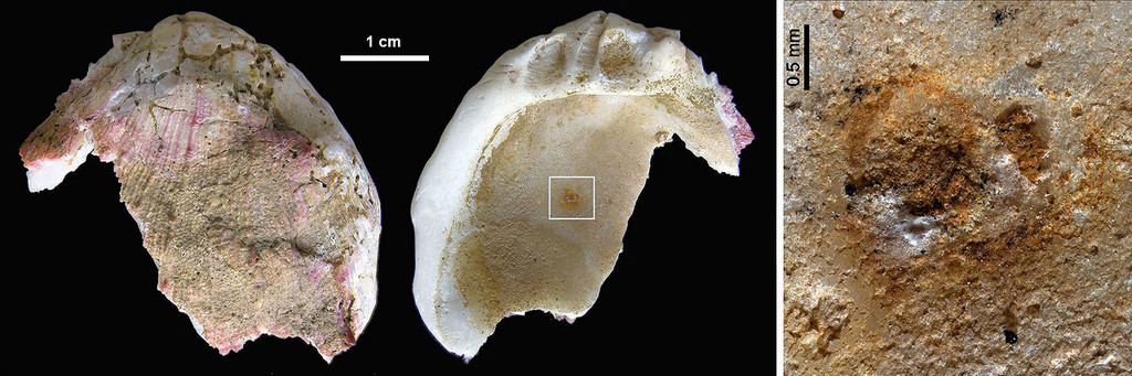 Neandertales Conchas 01