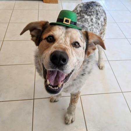 perros con sombreros