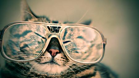 Como Fotografiar Mascotas I Gatos 11