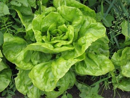 Trucos para crear un huerto en casa y tener verduras ecológicas