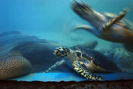 El acuario de la paradisíaca Nha Trang en Vietnam