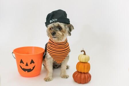 Ocho disfraces de Halloween con los que nuestros perros y gatos serán virales el 31 de octubre