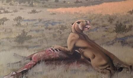 Se identifica un nuevo tipo de dientes de sable: vivió en América del Norte, pesó 200 kilos y cazaba animales diez veces más grandes