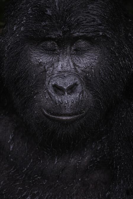 C Majed Ali Wildlife Photographer Of The Year