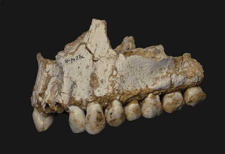 Este neandertal asturiano tomaban 'aspirina'