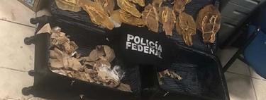 La venta de Totoaba sigue siendo un problema para la vaquita marina en México, se decomisaron más de 800 buches en una semana